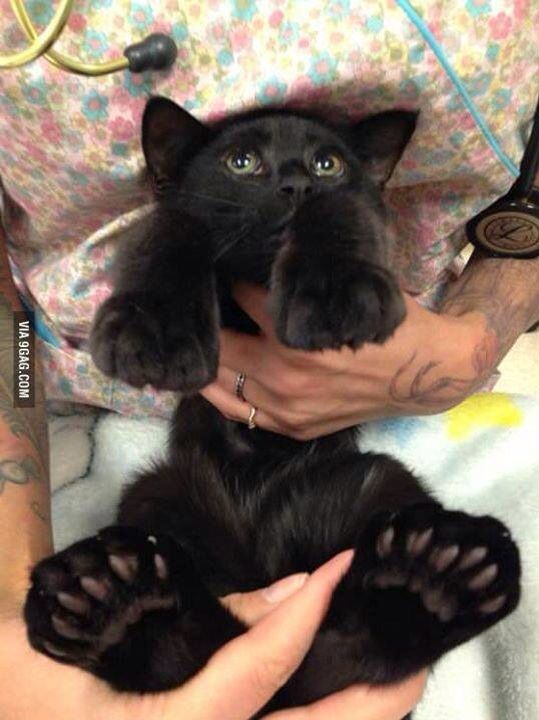 Je Awww Cats Paws Rescue Kitty