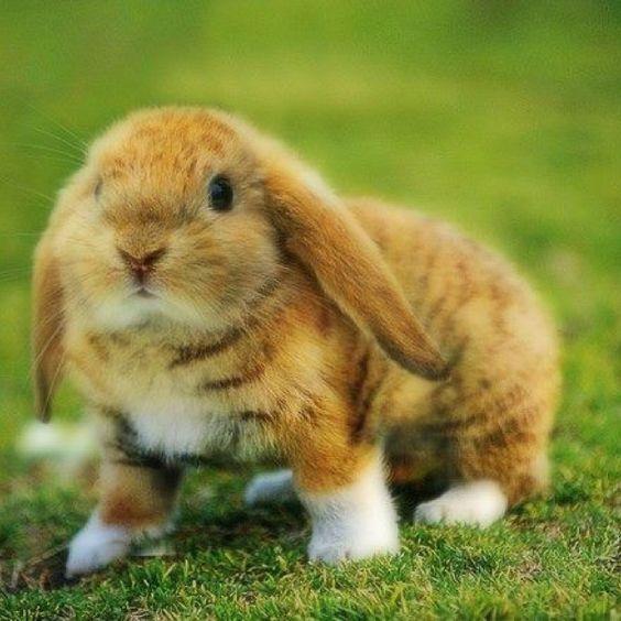 Kitty coloured bunny...huh???