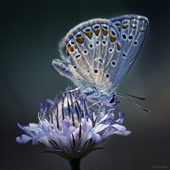 beautiful transluscent butterfly