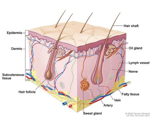 Show Pictures Integumentary system | Recent Photos The Commons Getty Collection Galleries World Map App ...
