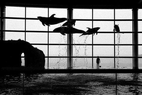 Shedd Aquarium, 1998, de André Andrade, na Fotospot: http://www.fotospot.com.br/fotografos/andre-andrade/