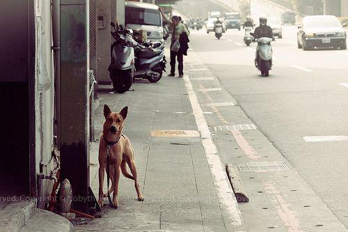 12月の犬 - 環河北路一段 -