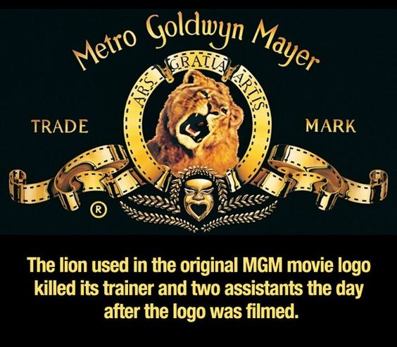 Random Facts About Everything (25 pics) The lion used in the original MGM movie logo killed its trainer and two assistants the day after the logo was filmed.