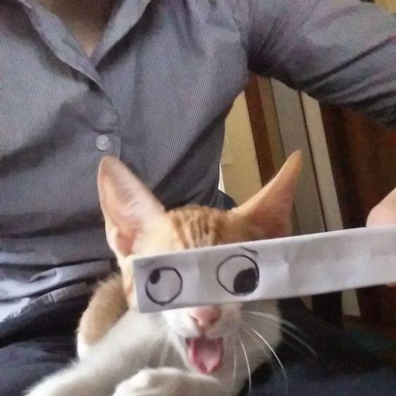【情報】朕就該有這種霸氣眼神!貓奴們為貓咪配上惡搞眼睛 @幸福寵物交流區 哈啦板 - 巴哈姆特
