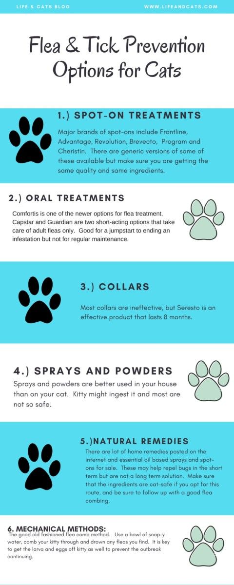 They Are Coming Fleas And Ticks 101 Life Cats Flea And Tick Cat Care Fleas