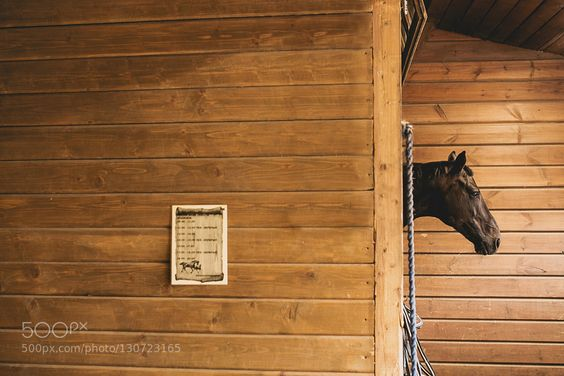 horse - Pinned by Mak Khalaf Abstract abstractabstractionanimalsartartisticcreativecreativitydesignheadhorse by TanyaSoloveva