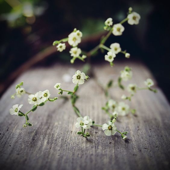 Baby's Breath // By: The-Exs-And-The-Ohs