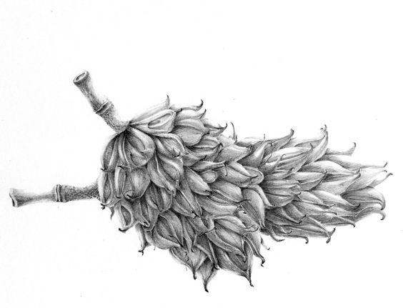 https://evamariaruhl.files.wordpress.com/2011/02/emruhl_magnolia-pods_2011copy21.jpg