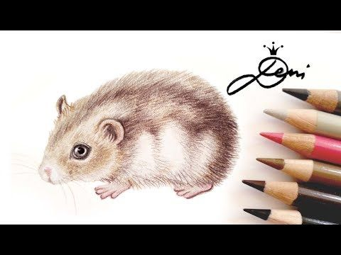 Hamster Dsungarisch Zeichnen Lernen How To Draw A Hamster Kak Se