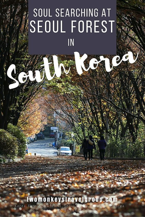 Soul Searching at Seoul Forest in South Korea Spring breathes new life into the world around us.  It is the season where flowers bloom. The leaves start to grow. The withered grass turns green. The birds start singing again. Springtime is the season of new beginnings.