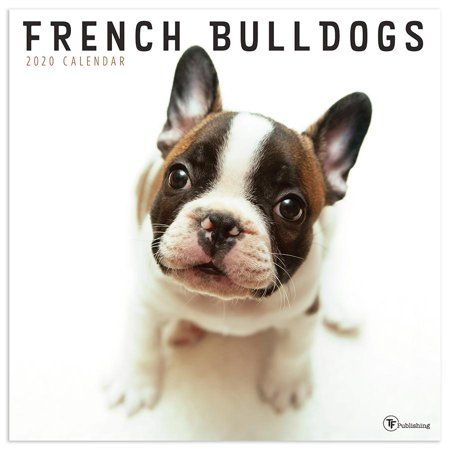Shop By Brand French Bulldog Most Popular Dog Breeds Popular
