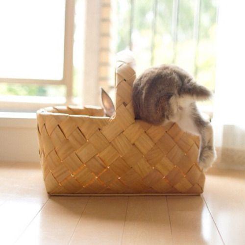 あ、マロン選手、踏み切りをちょっと失敗した模様…    a bit failure of jump.    #rabbit #うさぎ #マロン (Instagramで撮影)
