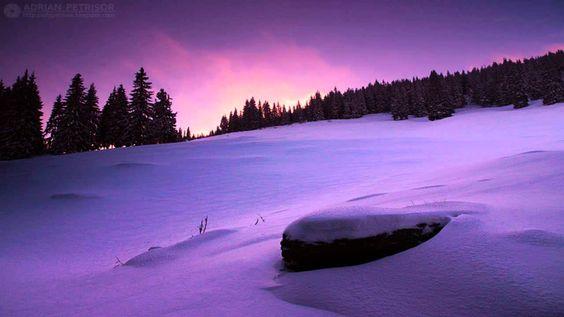 Vinterland - Vinterskogen