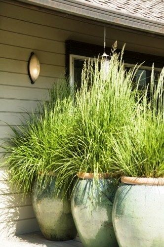 In an earlier post, I shared nine grasses that you can use for designing your garden landscape. Today, I am sharing some brilliant examples of landscapes and gardens that use ornamental grasses. Gr...
