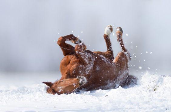 Грация, сила и краса... 30 идеальных фотографий лошадей;))