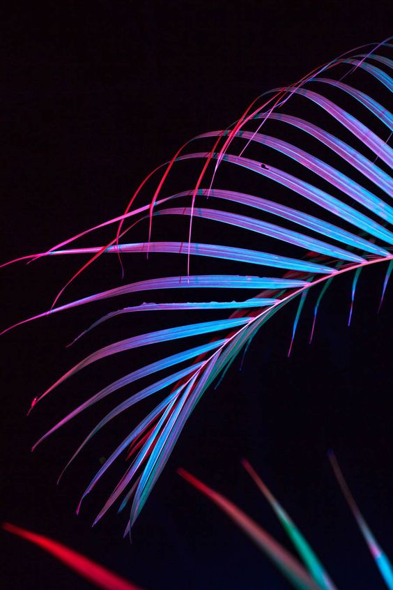 Pearly Neon Objects Photography – Fubiz Media