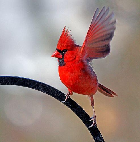 Os Pássaros Nem Sabem Mas Serão Beneficiados com Mais Sustentabilidade!