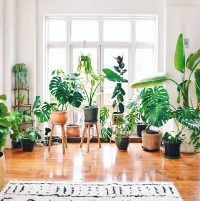 30 Plant Instagram Accounts For Decor Inspiration In 2019 In 2020 Easy House Plants House Plants Indoor Houseplants Indoor