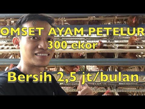 Usaha Ayam Petelur - Pabeas Foods