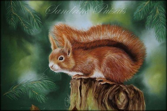 écureuil roux,pastel sec