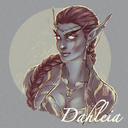 Dahleia Nachtjagd