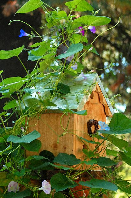 morning glory covered birdhouse