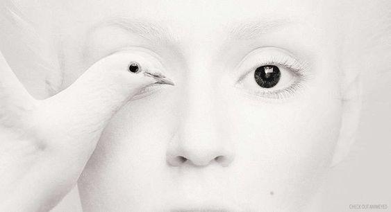 Los ojos de una fotógrafa juntos con ojos de distintos animales