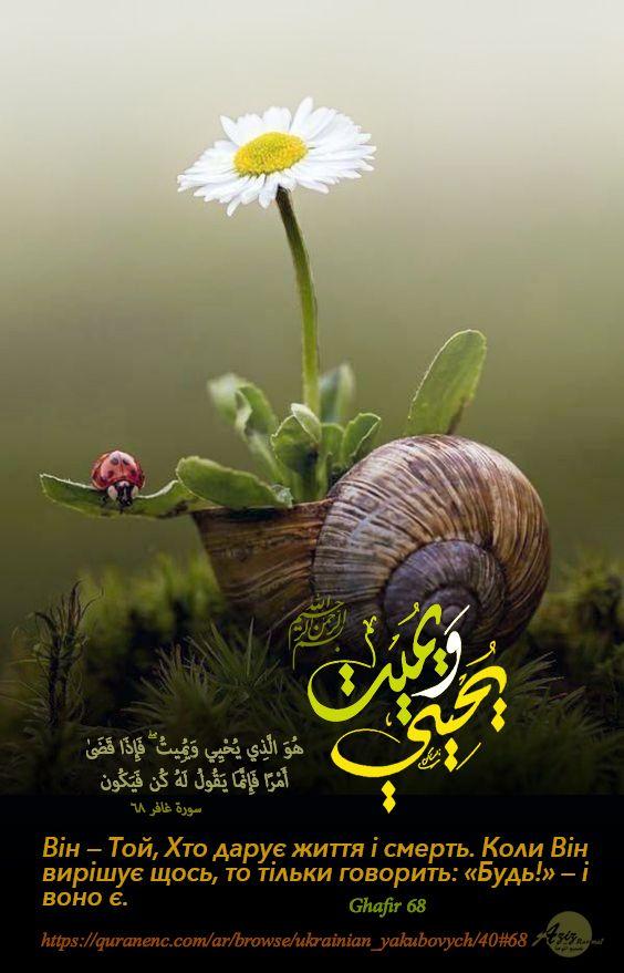 Pin By Sutan Hendy Alamsyah On Krasive Islamske Mistectvo Plants Wall Decor