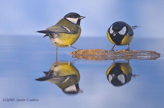 little birdies