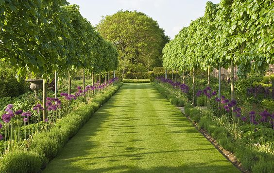 Romantic Country Garden Design in Surrey with pleached tree avenue, wide formal grass path, lavender hedges and alliums