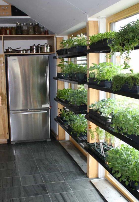 vegetable garden shelves near the window #gardenIdeas #garden #gardening #plants #homeDecor #indoor