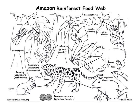 Pinterest the world s catalog of ideas for Food chain coloring page