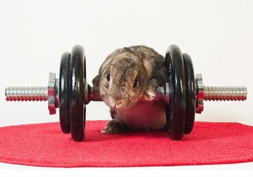 Lifting Weights exercises-for-rodents