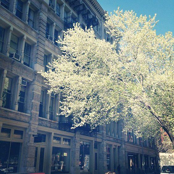 Prince Street in Bloom.
