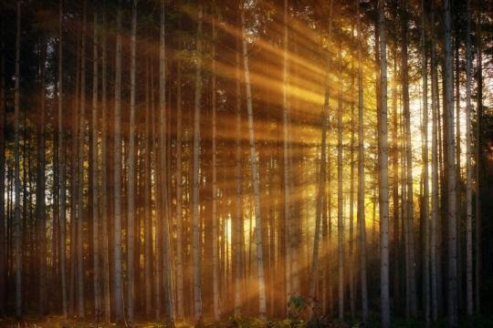 5 Best Wood Types For Exterior Window Trim Photo Wallpaper Landscape Photography Tips Landscape Photography