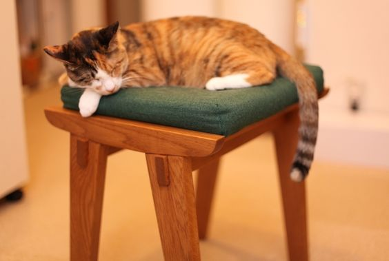 【急募】roomieフォトコンテスト、第2回のお題は「椅子」 | roomie