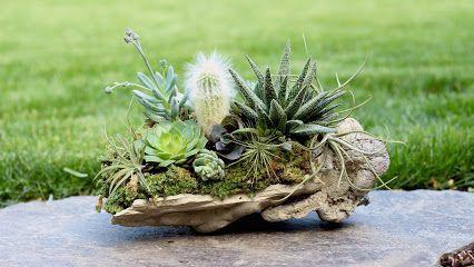 Succulentes et Sunshine - Google+