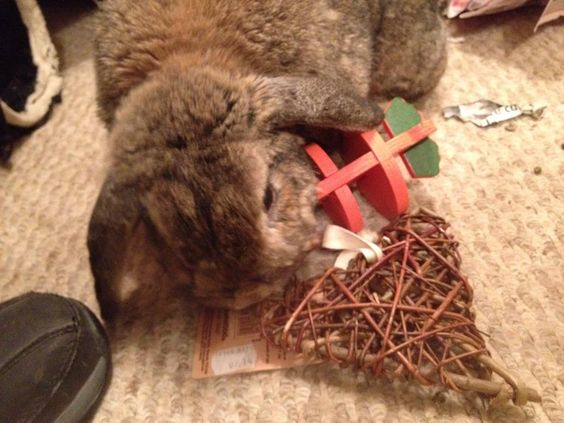 Storm the rabbit enjoying her willow heart and 3D carrot! Available now from Barks & Bunnies.