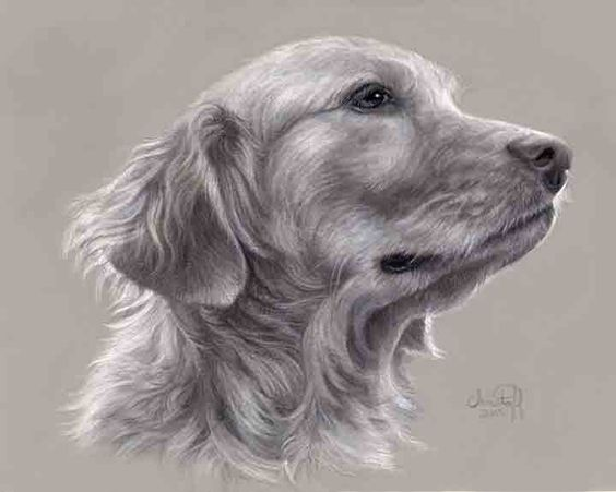 """Emily Christoff Flowers, """"Bailey,"""" pastel, charcoal and conte on gray Canson Mi-Teintes paper, 8 x 10 in"""