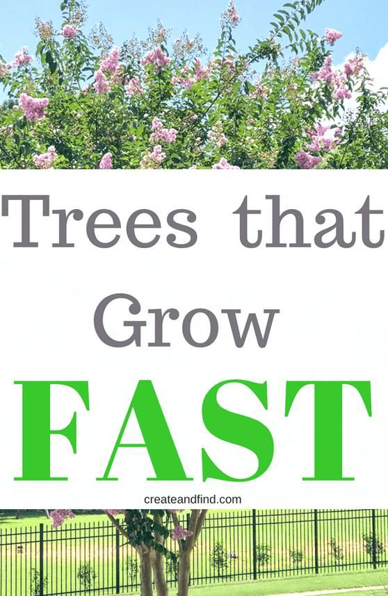 Fast Growing Privacy Trees You Can Plant For Quick Growing Shade And Shelter These Varieties Will In 2020 Landscaping Around Trees Landscaping Costs Fast Growing Trees