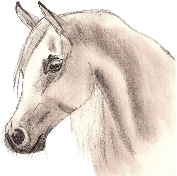 how to draw a cool horse