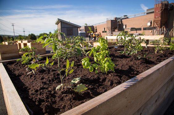 Qualité, goût, ultra-proximité, sans pesticides et souvent collaborative, la nouvelle agriculture investit la ville, portée… | #basileek