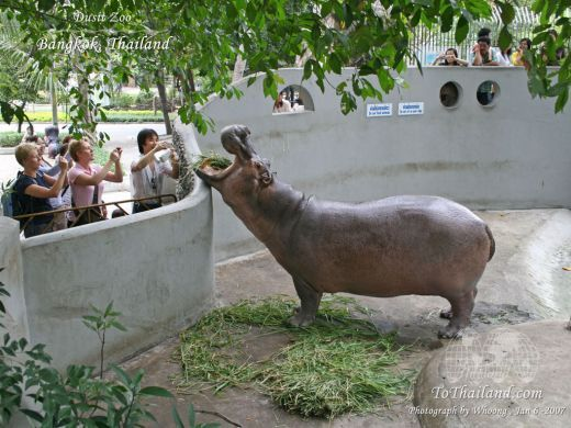 Travelnix.com – Dusit Zoo Bangkok Photos  Hippos for ...