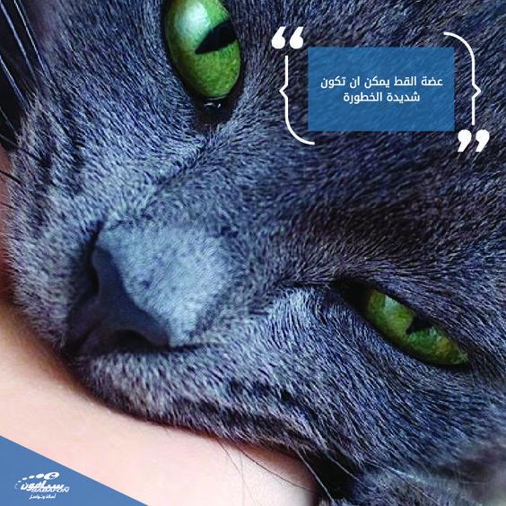 عضة القط يمكن ان تكون شديدة الخطورة ويرجع السبب الحقيقي أن اسنان القطط حادة وصغيرة مما