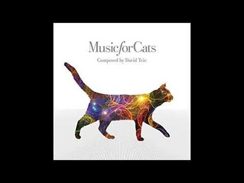 Music Is One Of The Most Fascinating Cat Calming Remedies Listen To 5 Free Cat Music Compilations To Ease Your Cat Into Cat With Blue Eyes Free Cats Buy A Cat