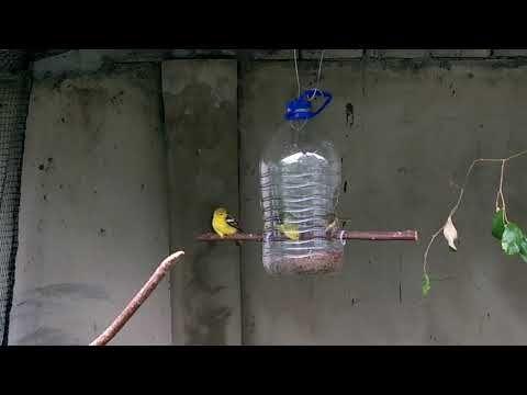 Bekas Makanan Diy Sesuai Pelbagai Burung Makan Bersama Dalam Bird