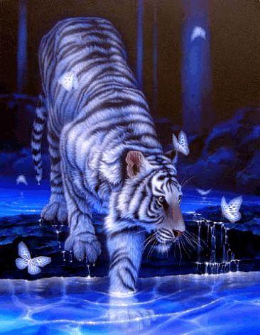 Weiße Tiger ............GIF .......