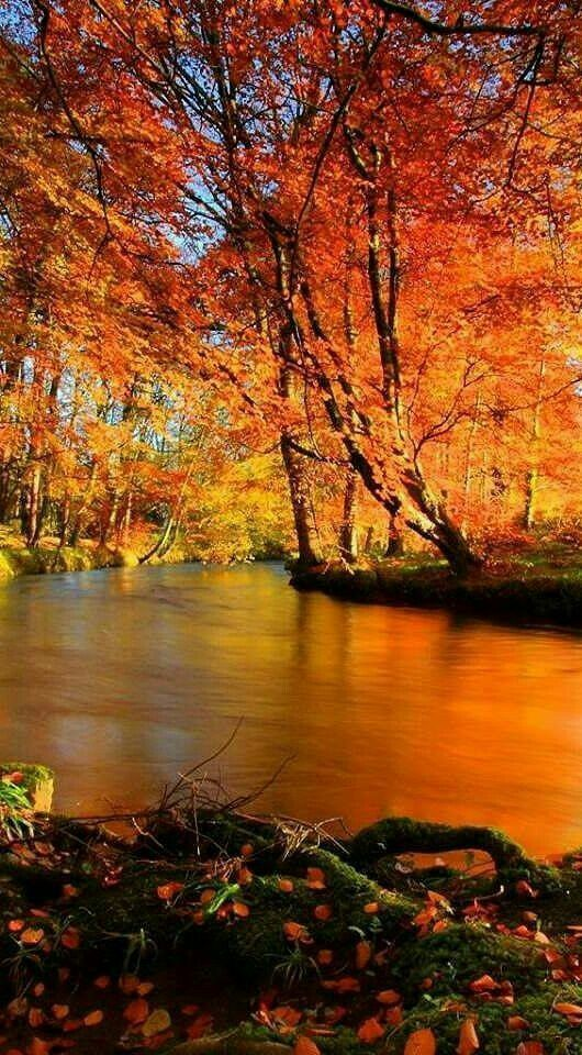 Autumn Along The River Autumn Scenery Fall Pictures Scenery