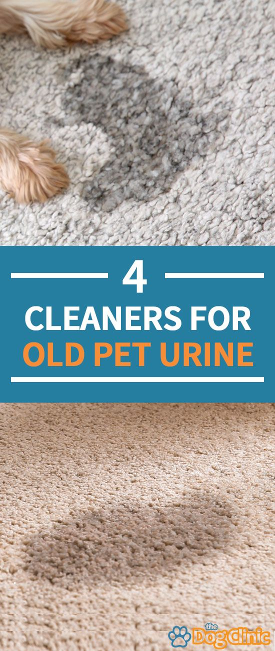 How To Get Rid Of Old Urine Stains On Carpet