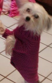 CPpulloverdogsweater
